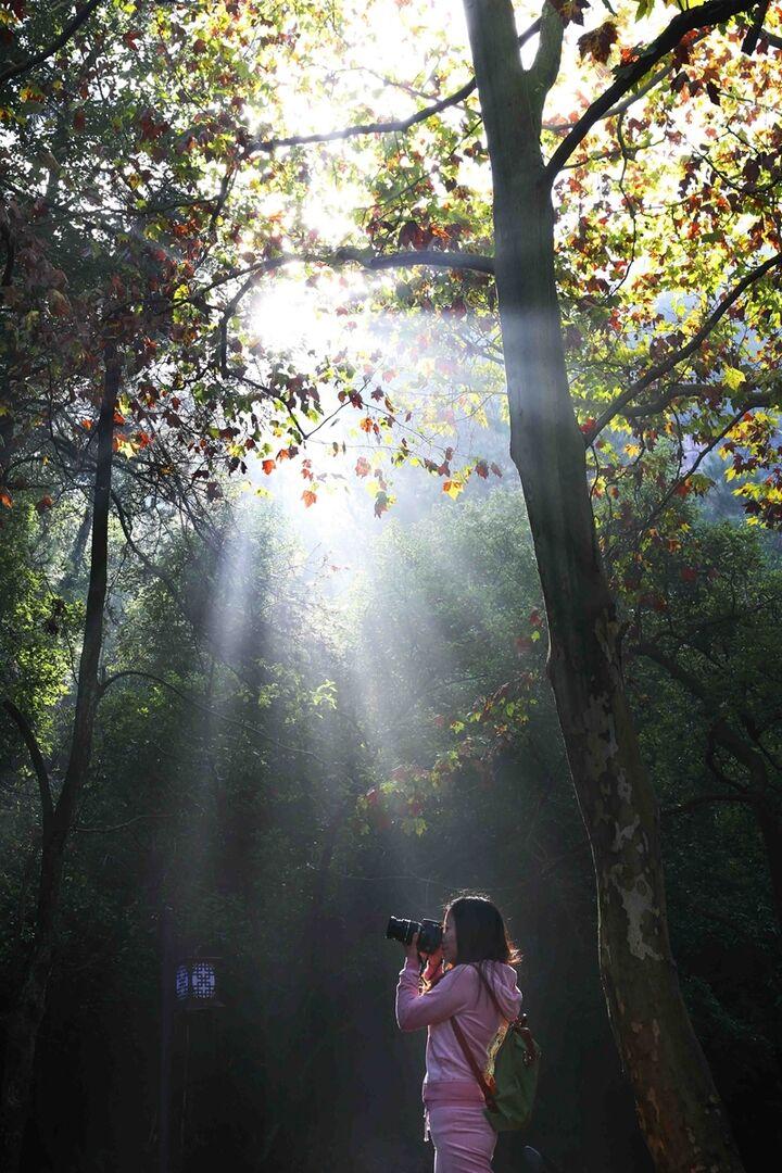 九峰山风景区植被茂密,一年四季不同秀色.这是初冬清晨倾洒的一缕