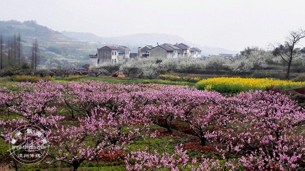 过庆东 《家在花海中》