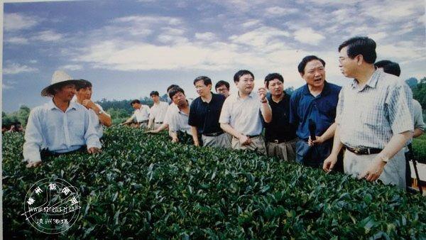 1999年8月13日,张德江在我市茶叶基地