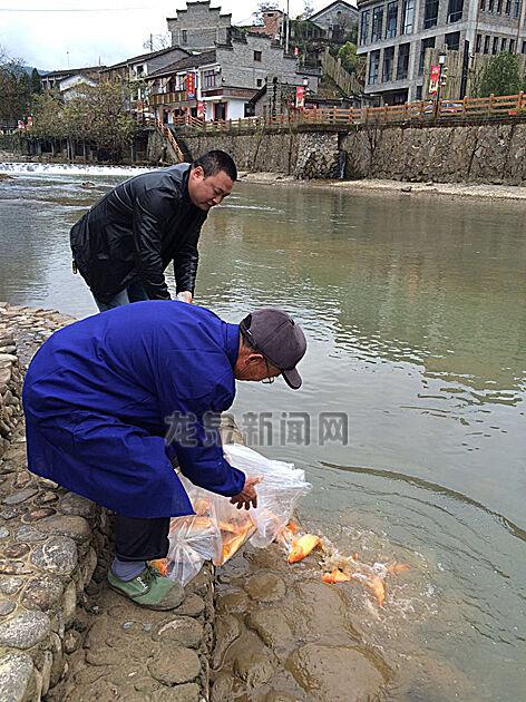 工作人员在上��镇向溪水中放流瓯江彩鲤
