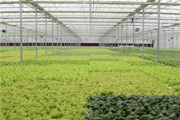 如椽巨笔勾勒现代农业新图景