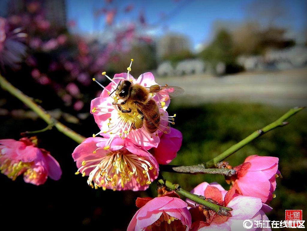 【行行摄摄】蜂和花