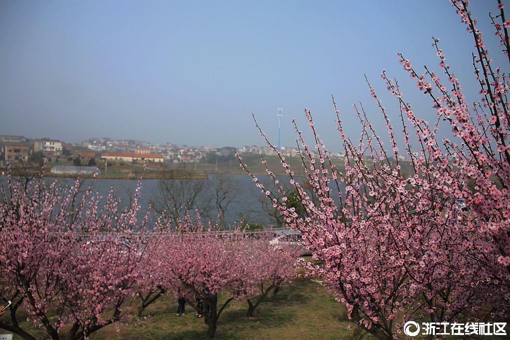 【行行摄摄】春天真美