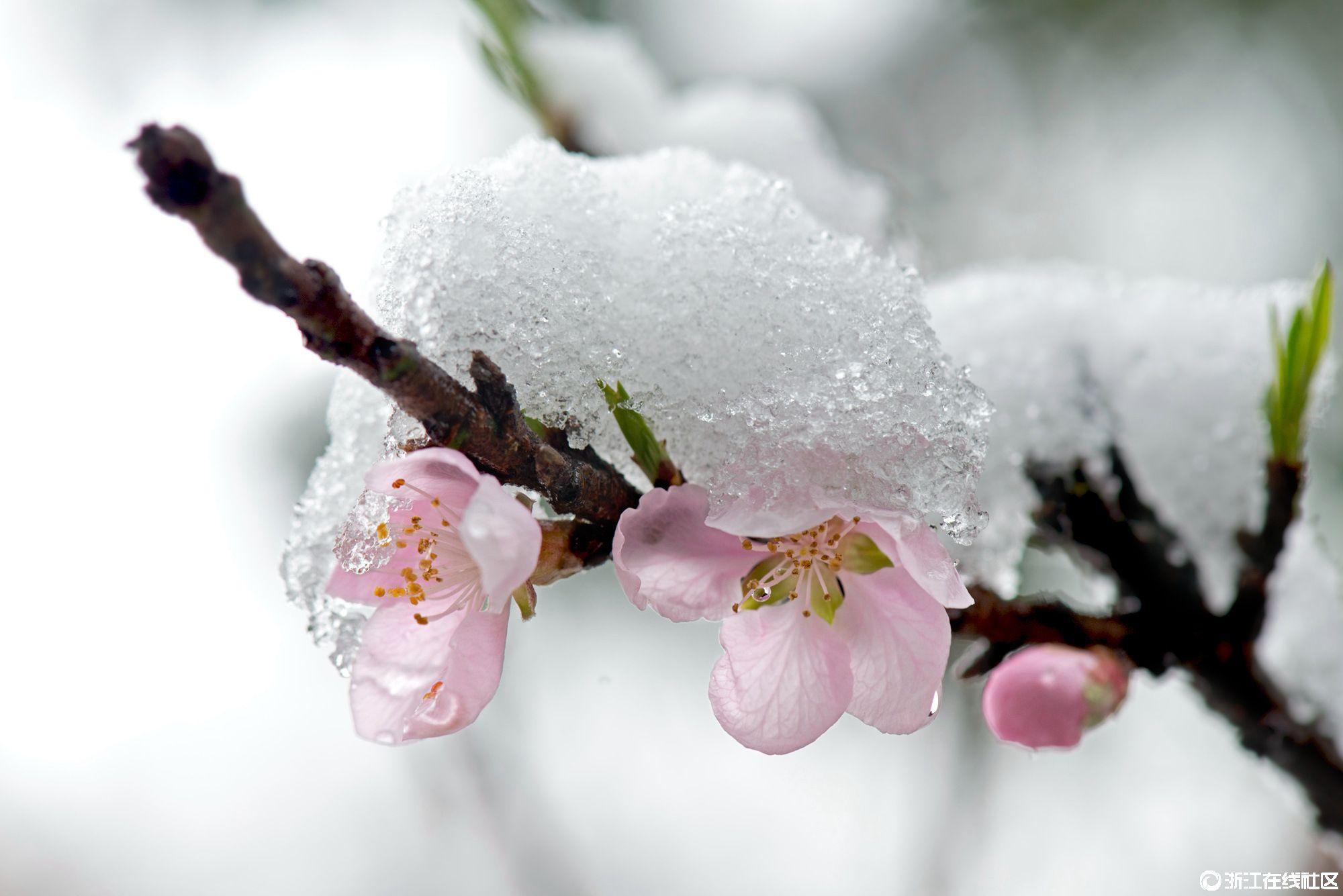 【行行摄摄】春寒