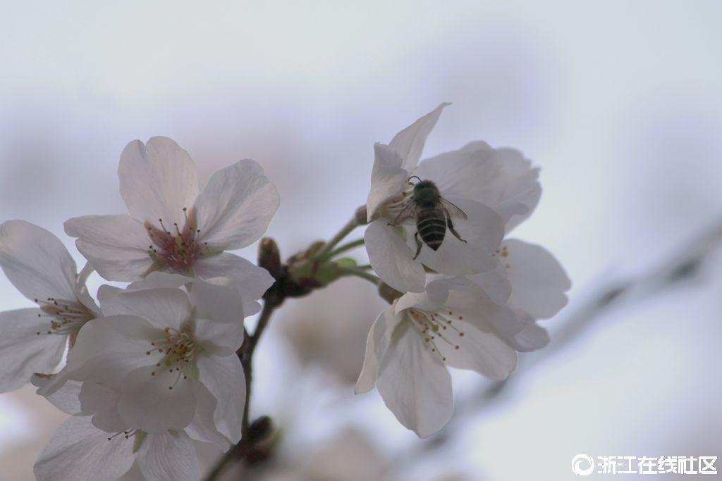 【行行摄摄】沐浴春光・赏樱花