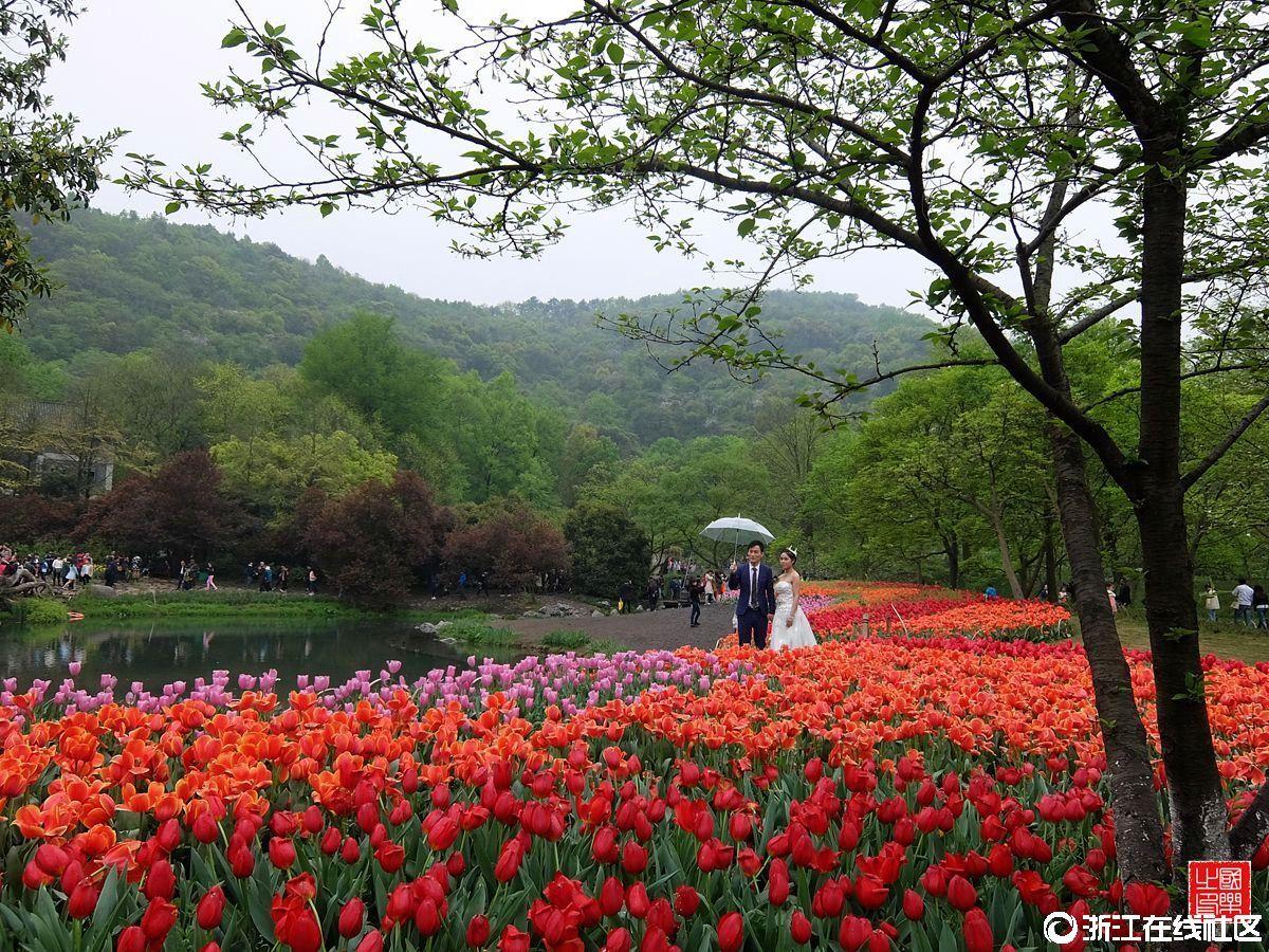 【行行摄摄】杭州太子湾公园