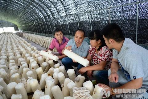 县农业局农技专家现场指导、帮助菇农解决难题