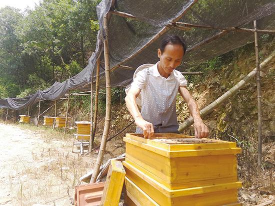 """陈生瑞:""""土""""法养蜂优质高量"""