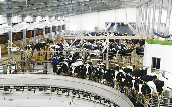 一景乳业打造浙最好的奶源地