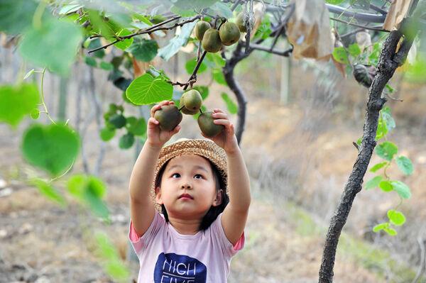 Hi,猕猴桃