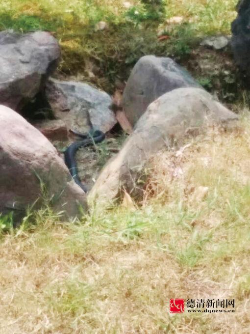 """塔山公园""""蛇出没"""""""