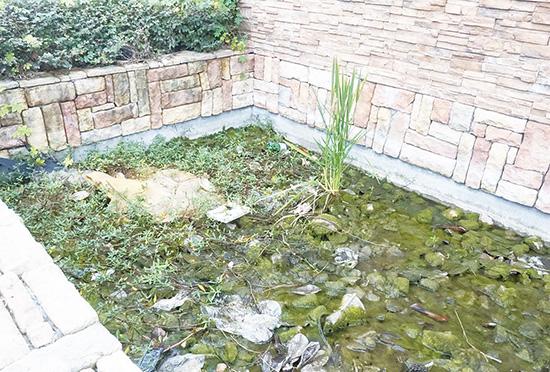 创卫警示榜:水池变污水漂浮脏物