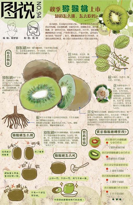 【第94期】秋季猕猴桃上市,你吃了吗?