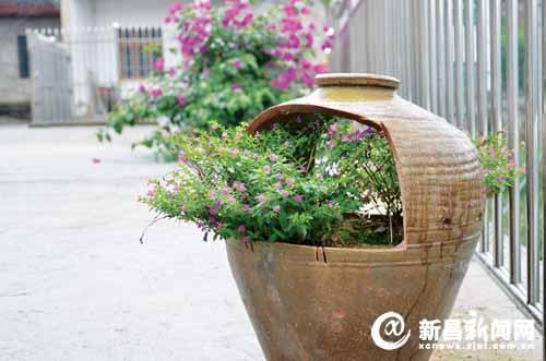 两棵2人高的桂花树已经冒出了细细的花蕊,桂花树根部被瓦片组成的花盆图片