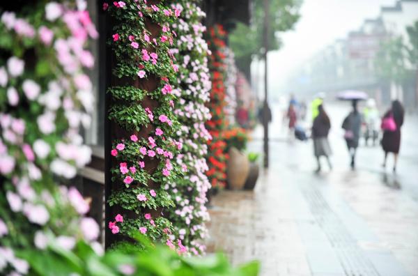 鲜花满街喜迎盛会