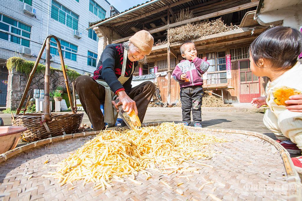 番薯丰收季