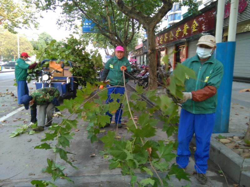 行道树修剪