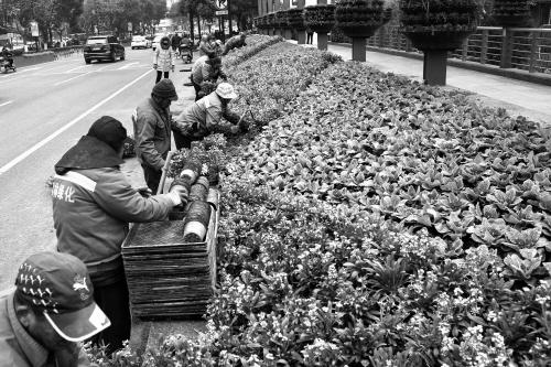鲜花扮靓街头