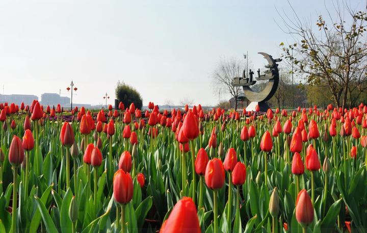 中洲公园可赏花赏灯 兰溪颜值要爆表