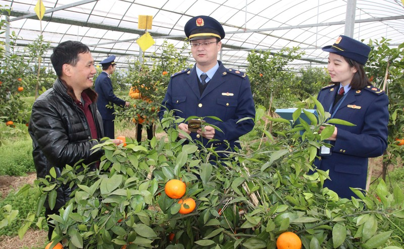 助推柑橘合作社产业结构转型