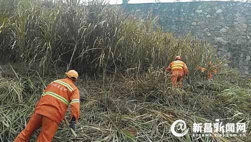 上三高速沿线杂草被清理