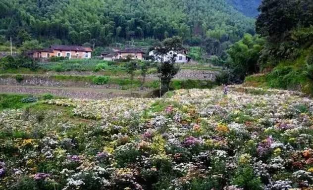 这地方走肺!衢州新增15个森林小镇和森林人家