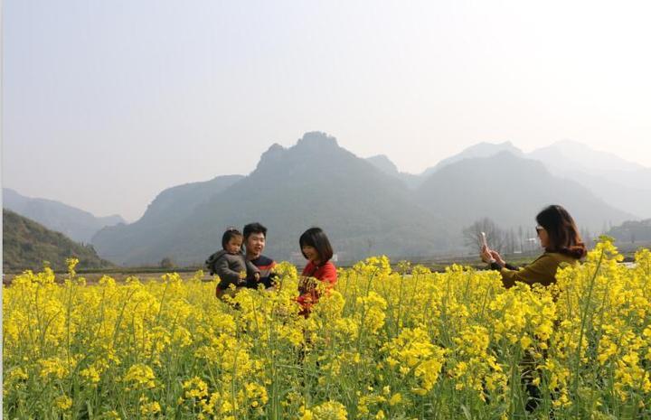 武义油菜花绽放 引众多游客观光