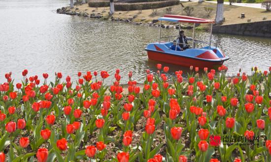游湖赏花正当时