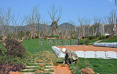 黄灌防洪堤一期工程现场工人们忙着铺设草皮