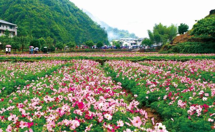 2000亩花籽已播下 5月将花漫浦江