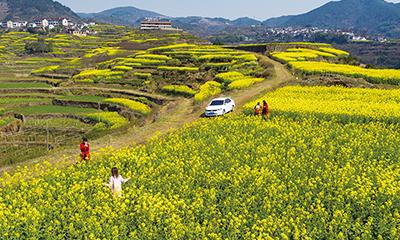 春在田头油菜花