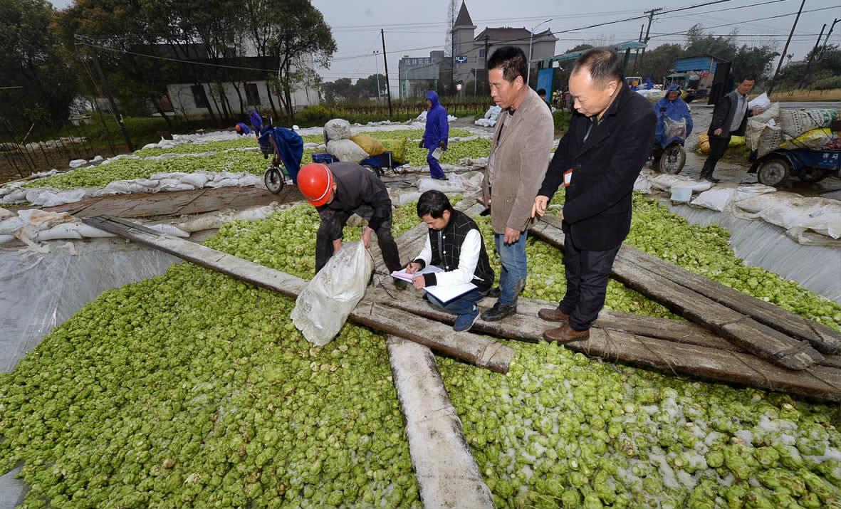 规范榨菜行业秩序保一方水土洁净