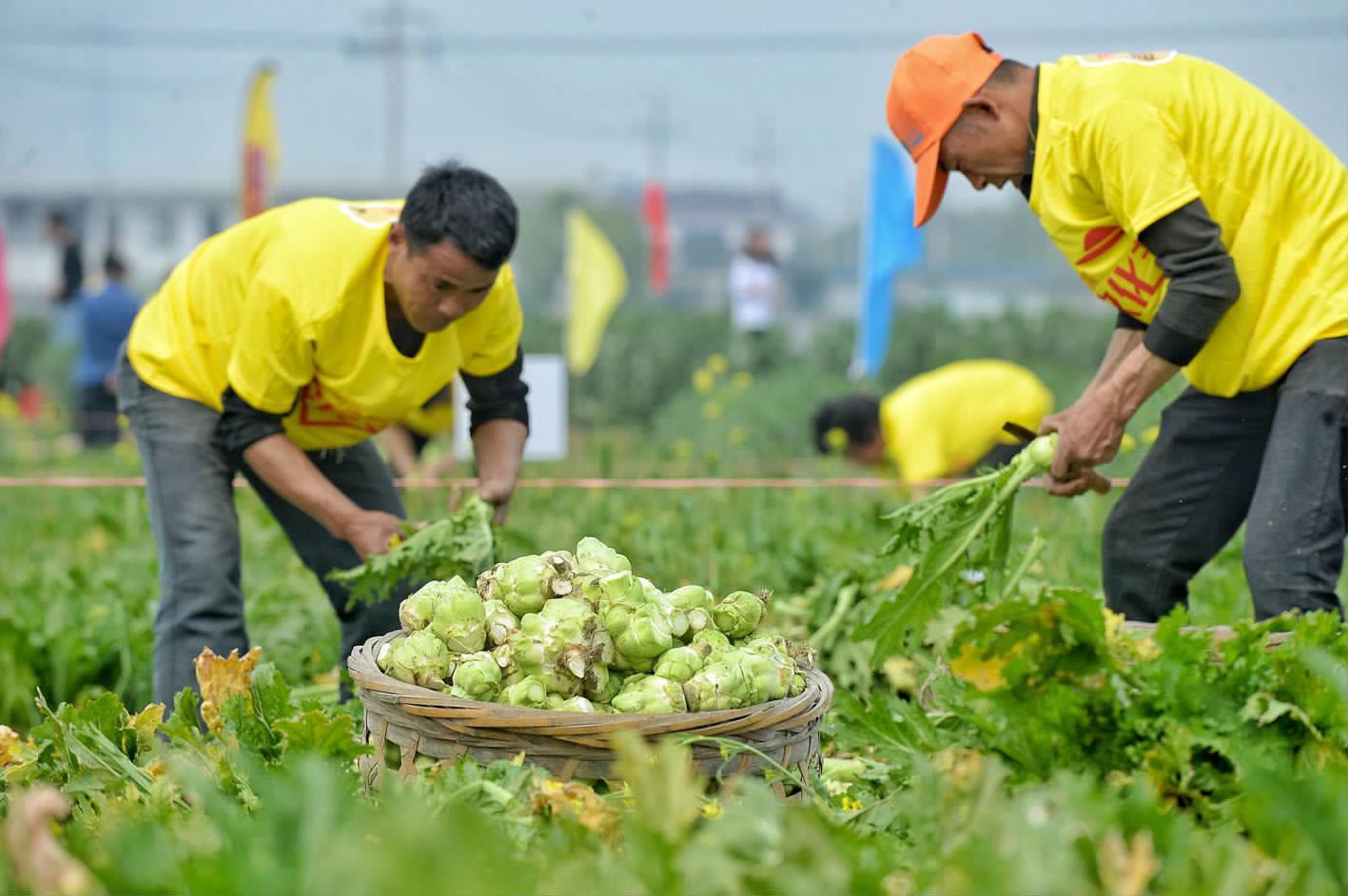 农民文化节比拼起榨菜