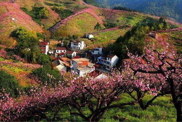 源东桃花节吸引游客28万 日均4万人次踏春赏花