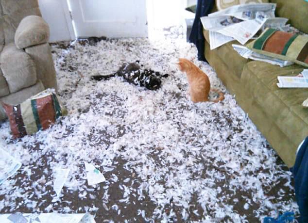 铲屎官开门瞬间就崩溃了:比拆迁队还厉害的宠物