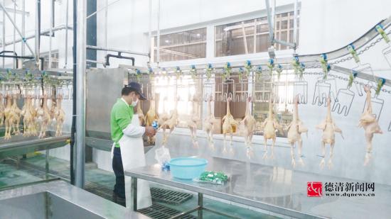 家禽集中杀白项目投入运行