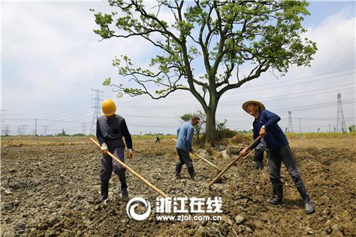 德清新市:立夏时节田间农事忙