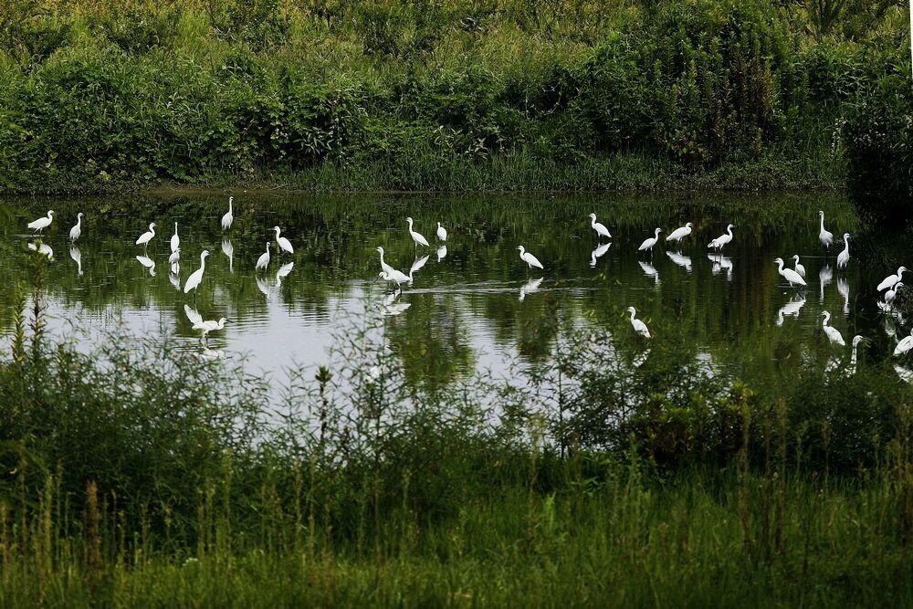 《水清鸟来》