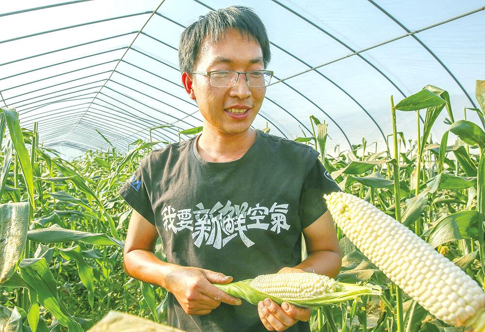 这种玉米可以生吃