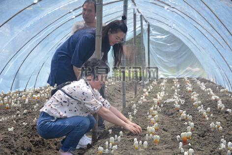 农业局工作人员对灵芝栽培进行技术指导