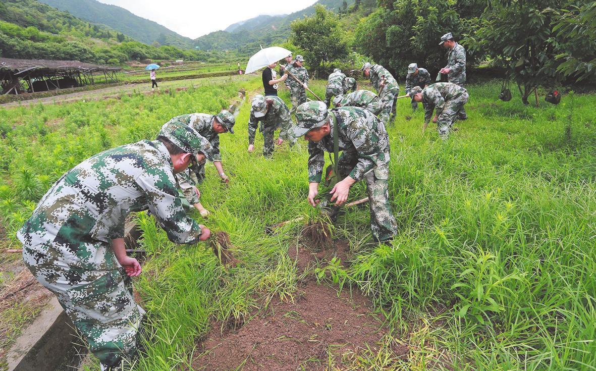 铁军后备军集训班学员助力美丽乡村建设