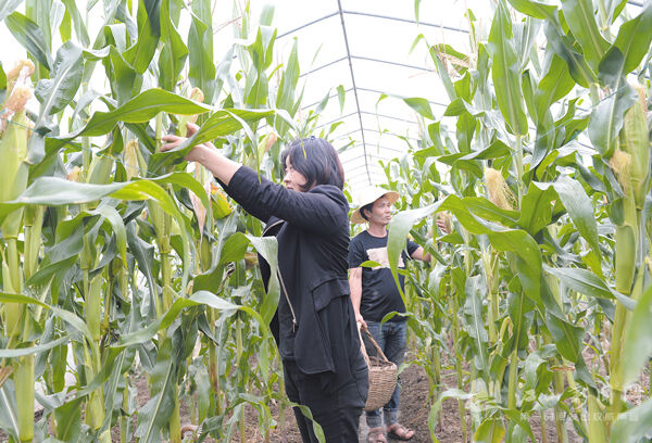 发展现代农业