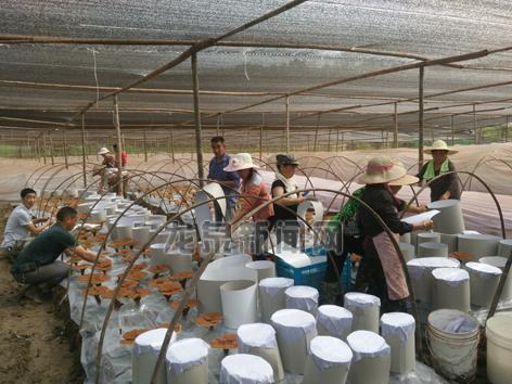 我市大力扶持农民工返乡创业