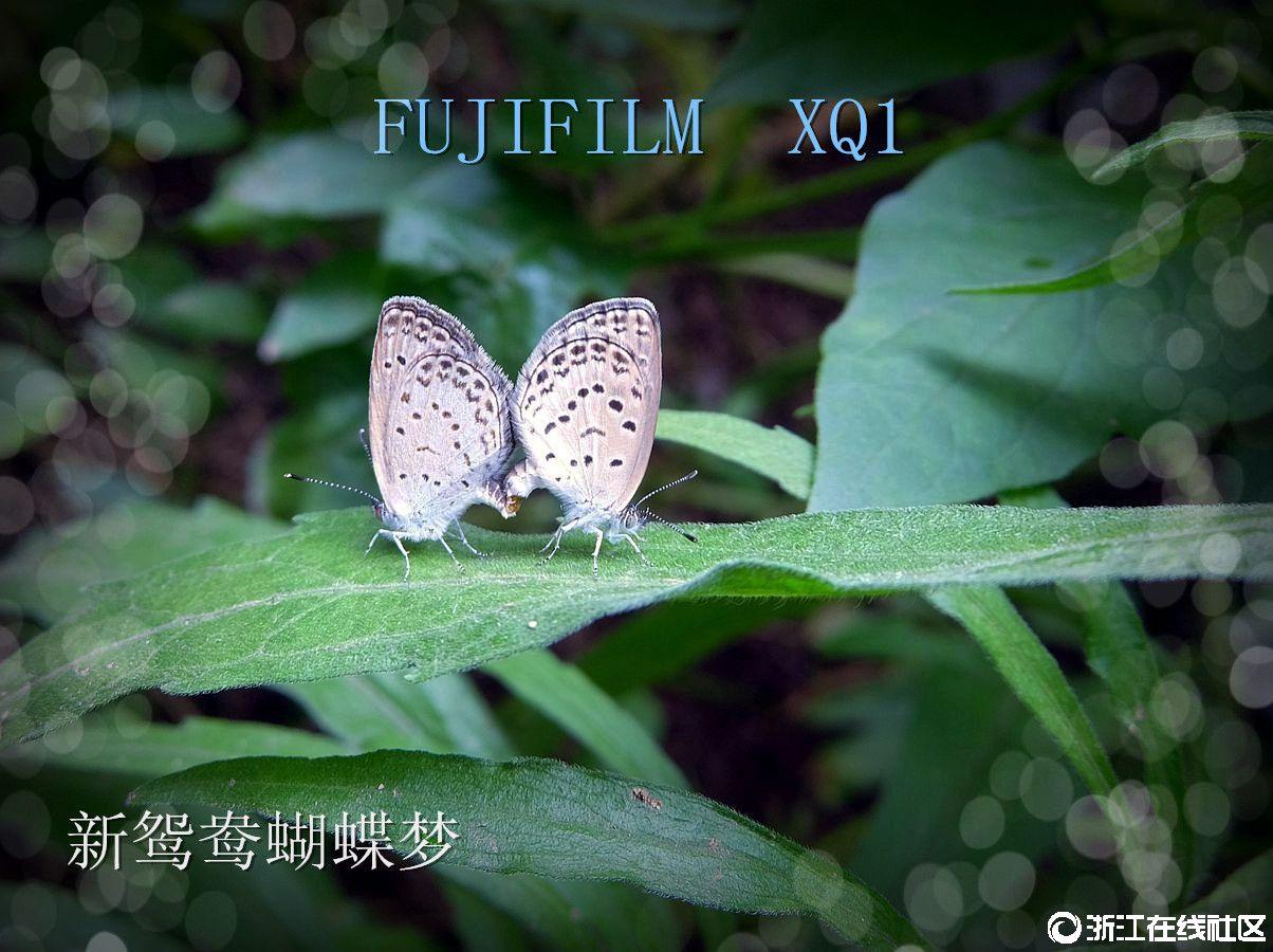 【行行摄摄】新鸳鸯蝴蝶梦