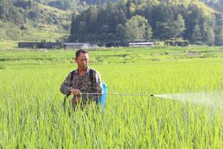 高温天气抓好水稻田间管理