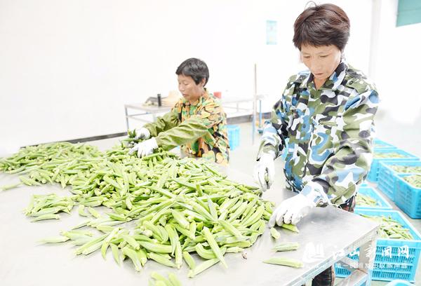 黄秋葵大量上市