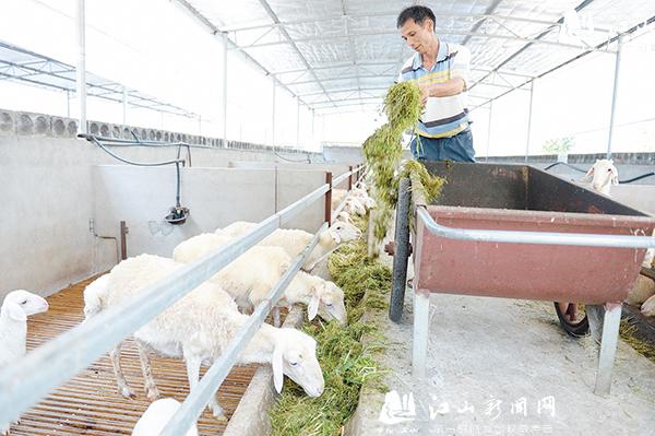 """""""鑫宝""""湖羊效益好"""