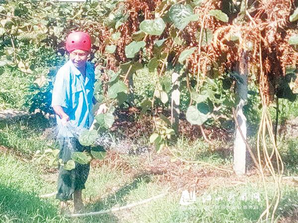 抗旱保猕猴桃正常生长