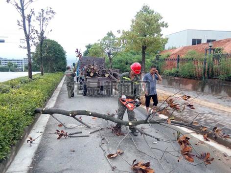 市园林处分片区对受损行道树进行修剪、清理