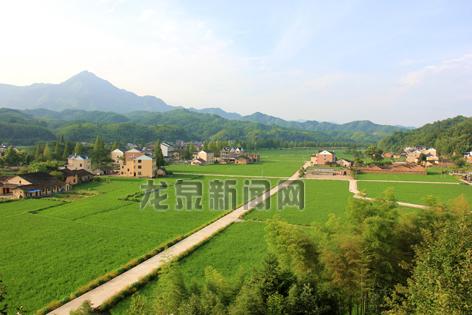 小梅镇黄南村千亩水稻实施病虫害统防统治